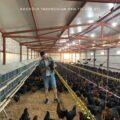 izmir tavuk ciftlikleri
